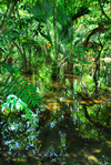 Punta Cana, Dominican Republic: a swamp - photo by M.Torres