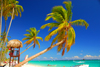 Punta Cana, Dominican Republic: coconut trees lean over a perfect beach - Arena Gorda Beach - photo by M.Torres