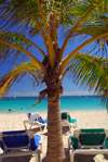 Punta Cana, Dominican Republic: Lounge chairs and coconut tree - Arena Gorda Beach - photo by M.Torres