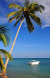 R�o San Juan, Mar�a Trinidad S�nchez province, Dominican republic: coconut tree leaning over the sea - small boat - beach scene - photo by M.Torres