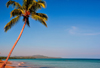 R�o San Juan, Mar�a Trinidad S�nchez province, Dominican republic: beach with coconut tree leaning over the sea - horizon - photo by M.Torres