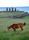 Easter Island - Ahu Tahai: horse in the fields near the port town of Hanga Roa - moais in the background - Rapa Nui - Ilha da Pascoa, Isla de Pascua - photo by Rod Eime