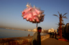 Egypt - Alexandria: cotton candy / candyfloss seller on the Corniche (photo by John Wreford)