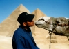 Giza: kissing a camel (photo by J.Kaman)