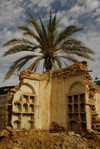 Eritrea - Massawa / Mitsiwa / Massaua / Batsi, Northern Red Sea region: palmtree and ruins in the old quarter - photo by E.Petitalot
