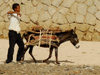 Eritrea - Keren, Anseba region: donkey transporting wood for the weekly market - photo by E.Petitalot