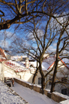 Estonia - Tallinn - Old Town - Komandandi Overlook - trees, roofs and snow - photo by K.Hagen