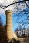 Estonia - Tallinn - Old Town - Pikk Hermann / Tall Hermann Tower framed by trees - photo by K.Hagen
