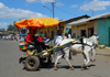 Gondar, Amhara Region, Ethiopia: horse-drawn taxi - photo by M.Torres
