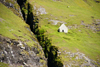 Vestmannasund sound, Streymoy island, Faroes: isolated house on a green slope - photo by A.Ferrari