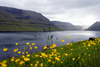 Kunoy island, Nor�oyar, Faroes: seen from Kalsoy - flowers and the Kalsoyarfj�r�ur - photo by A.Ferrari