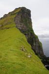 Kalsoy island, Norðoyar, Faroes: vertical cliff face near the Kallur lighthouse - Djúpini - photo by A.Ferrari