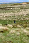 Falkland islands - East Falkland - Port Louis - sheep in the fields - photo by Christophe Breschi