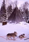 Finland - Lapland: kota, a Sami tent and huskies (photo by F.Rigaud)