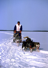 Finland - Lapland: huskies and sledge - dogsled (photo by F.Rigaud)
