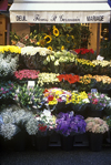 Paris, France: flowers for sale at a street market - Saint Germain des Près, Rue de Buci - 6e arrondissement - photo by C.Lovell