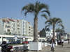 Le Havre, Seine-Maritime, Haute-Normandie, France: palm trees and bikers, Seafront - Normandy - photo by A.Bartel