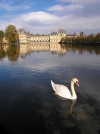 France - Fontainebleau  (Seine et Marne): the palace - swan (photo by J.Kaman)