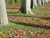 France - Versailles (Yvelines): Autumn - fallen leaves (photo by J.Kaman)