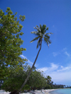 French Polynesia - Moorea / MOZ (Society islands, iles du vent): vegetation along the beach - photo by R.Ziff