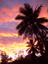 French Polynesia - Moorea / MOZ (Society islands, iles du vent): palms at dusk - photo by R.Ziff