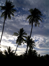 French Polynesia - Moorea / MOZ (Society islands, iles du vent): palms and cloudy sky - photo by R.Ziff