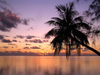 French Polynesia - Moorea / MOZ (Society islands, iles du vent): Polynesian palm in the evening - photo by R.Ziff