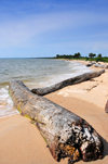 Domaine de Nyonié, Estuaire Province, Gabon: old logs on a tranquil tropical beach - photo by M.Torres