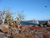 Galapagos Islands: cactus by the coast - photo by R.Eime