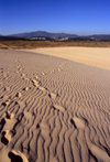 Galicia / Galiza - Corrubedo National Park - A Coru�a province: footprints on the sand dune - Parque Natural Dunas de Corrubedo - Rias Baixas - photo by S.Dona'