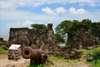 James Island / Kunta Kinteh island, The Gambia: British 18h century cannon and the ruins of Fort James - UNESCO world heritage site - photo by M.Torres