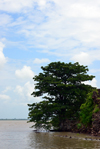 James Island / Kunta Kinteh island, The Gambia: baobabs by the water and crumbling fortress walls, due to river erosion - UNESCO world heritage site - photo by M.Torres