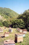 Georgia - Shida Kartli region: beehives outside Gori - photo by M.Torres