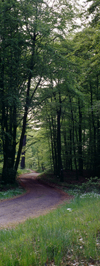 Eisenach, Thuringia, Germany: road in the forest near Wartburg Castle - Thuringian Forest - photo by A.Harries