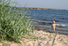 Fårö island: toddler / baby on the beach - seaside - photo by C.Schmidt