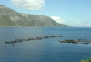 Greek islands - Cephalonia / Kefalonia / Kafallinia / EFL: a fish farm  - photo by G.Frysinger