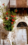 Greece - Methoni (Patra - Peloponnese): red flowers - photo by T.Marshall