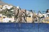 Greece, Dodecanese, Leros:octopus hanging out to dry at the port of Agia Marina - photo by P.Hellander