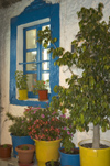 Greece, Dodecanese, Kos:painted window and pot plants in neighbourhood taverna - photo by P.Hellander