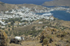 Greece, Dodecanese, Patmos:view of Patmos harbour from Hora with horses in foreground - photo by P.Hellander