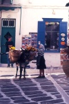 Greek islands - Mykonos (Hora) / Mikonos / JMK: flower lady with donkey delivery (photo by Mona Sturges)