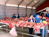 Greenland - Nuuk / Godthab: Braedet Market -  caribou meat - photo by B.Cloutier