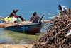 Fort-Liberté, Nord-Est Department, Haiti: transporting wood on a fishing boat - photo by M.Torres