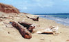 Hawaii - Lana'i island: the beach - photo by G.Frysinger