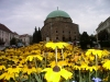 Hungary / Ungarn / Magyarország - Pécs: flowers and Mosque Church - former Pasha Gazi Kassim mosque (photo by J.Kaman)