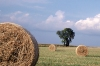 Hungary / Ungarn / Magyarország - Great Plain: field after the harvest - hay bales (photo by J.Kaman)