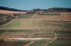 Hungary / Ungarn / Magyarorsz�g - Tokaj: vineyards II (photo by J.Kaman)
