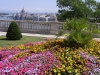 Hungary / Ungarn / Magyarország - Budapest: floral lookout from Castle hill towards the Parliament - flowers (photo by J.Kaman)
