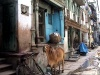 India - Ahmadabad / Ahmedabad / AMD (Gujarat): cow on the street (photo by Alejandro Slobodianik)