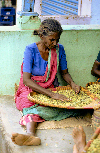 South India - Malabar coast: woman preparing cardamom / cardamon seeds - Elettaria cardamomum - photo by W.Allgöwer